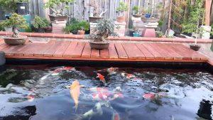 Top 10 đơn vị thiết kế hồ cá koi tốt nhất tại Tphcm hiện nay