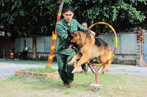 Trường huấn luyện chó cảnh uy tín tại TPHCM